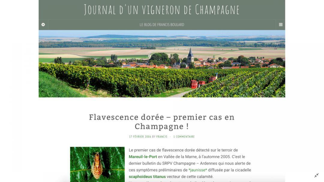 走近香槟'科学' | 葡萄金黄化病:21世纪的根瘤蚜?