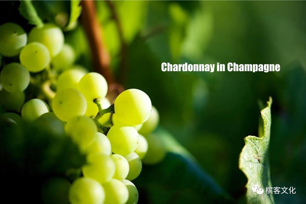 小农香槟 I Pierre Peters 极致完美主义白中白