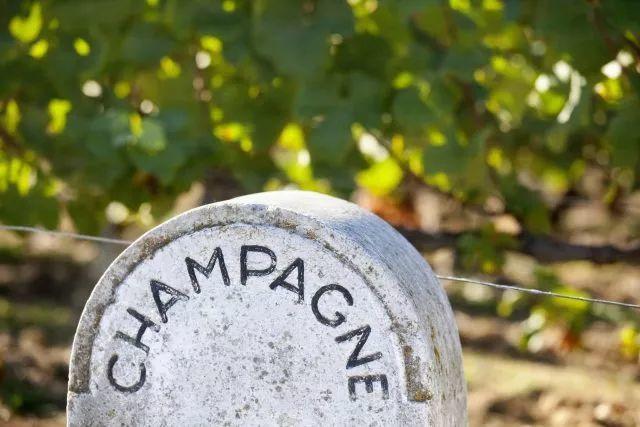 香槟速报│气候变暖当前,看香槟区如何应对